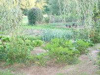 Help yourself to vegetables in season from our organic garden.