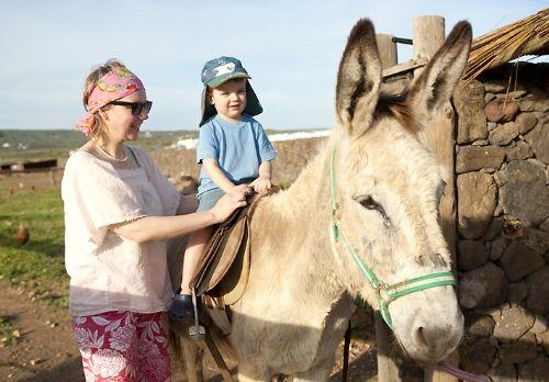 Mollie the Donkey