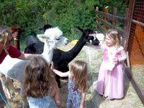Very child friendly Alpacas