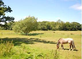 Old Hall Farm-Henry's Barn Image 2