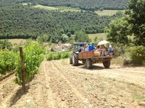 BBQ in the Vineyard - family fun on the tractor and trailer
