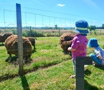 Saying hello to the sheep
