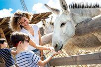 Farm Animals at Finca De Arrieta