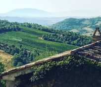 View over La Stalla to vineyard, guests can walk to a wine tasting if interested