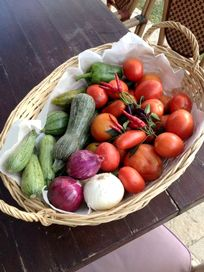 Guests are encouraged to help themselves to our vegetable and herb gardens