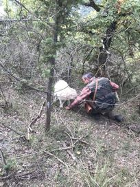 Why not book a truffle hunt with Massimo and his dog Yuma during your stay, walking distance from Casa San Gabriel