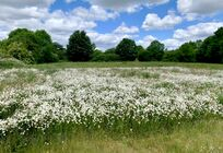 Wildflower fields supporting the local habitats
