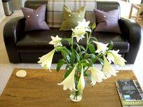 Simmental lilies