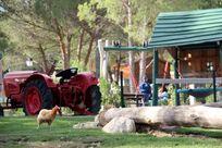 Children's petting farm