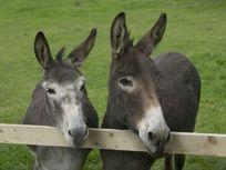 Donkey Mill Image 8