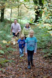 Woodland Walk At Fron Fawr