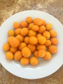 Kumquats from neighbour