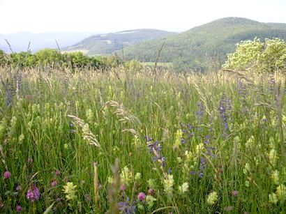 Surrounded by wildflower meadows, mountains and lakes