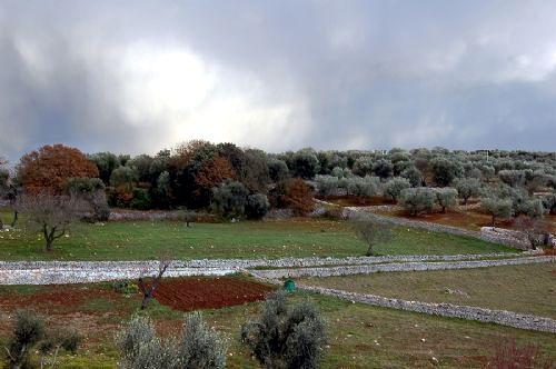 Casa Olive Image 5