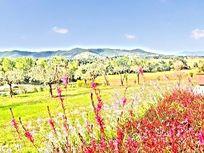 Sunflower Springs - Tignanello Image 7