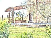 Sunflower Springs - Tignanello Image 8