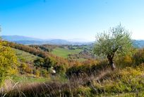 The view towards Assisi