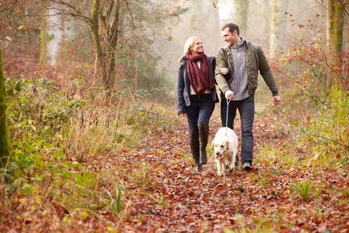 Romantic woodland walks
