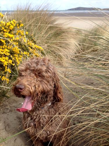 Pet friendly all year around at the local Poppit Sands