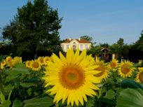 Artagnan - Top rated Child-Friendly Villa in Gascony