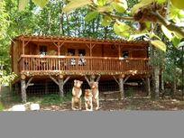 Pagel - Goldilock's Cabin Image 8