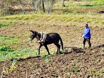 Traditional farming techniques are still used in the village