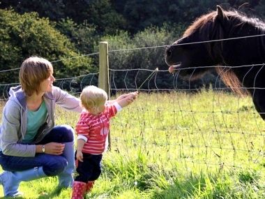 Shetland Pony Feeding