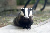 Feed the badgers! A photo taken by one of our guests