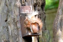 Watch the squirrels feeding from the nut boxes