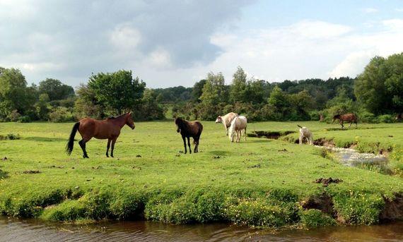 5 minute walk to popular beauty spot Mill Lawn