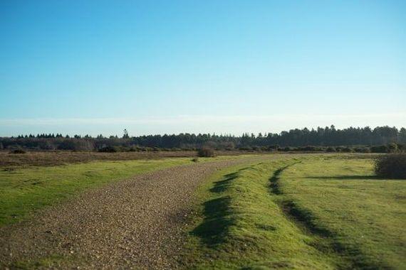 Forest tracks for rambling walks