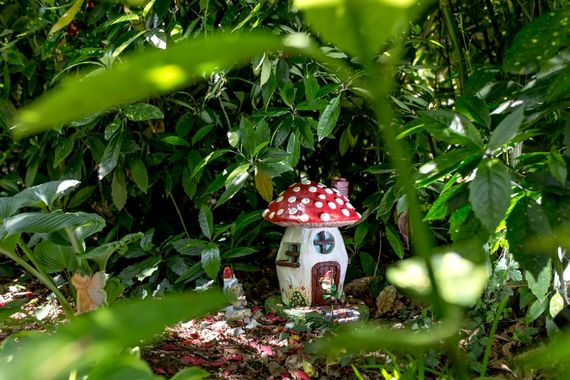 Magical adventures in the cottage garden