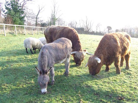 Bull Run (Sleeps 4 + Cot) Image 8