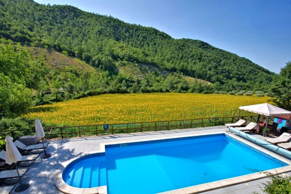 Swimming pool overlooking the sunflowers