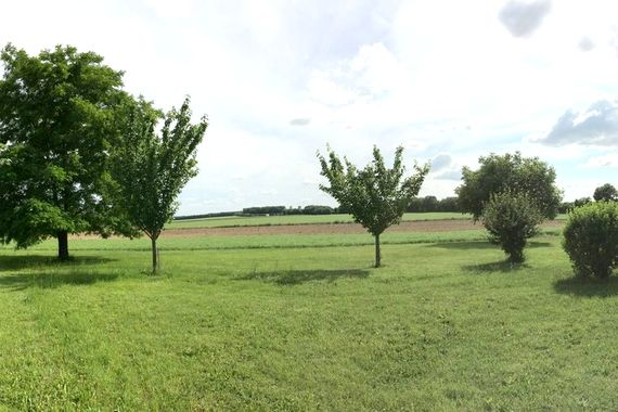 Garden and views beyond