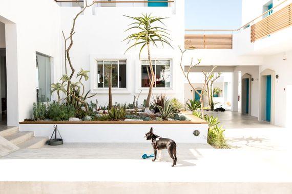 Ammos Hotel - Garden View Studio Image 20