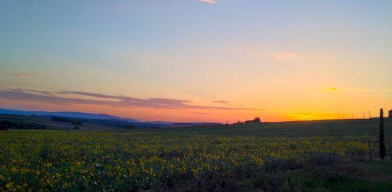 Sunflower Springs - Ornellaia Image 17