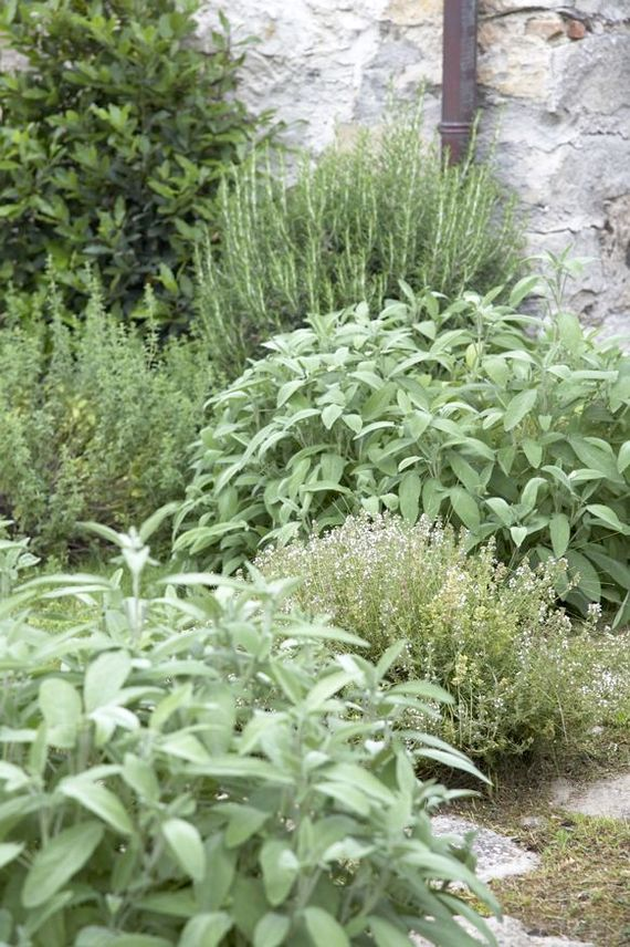 Guests are encouraged to help themselves to our herb and vegetable gardens