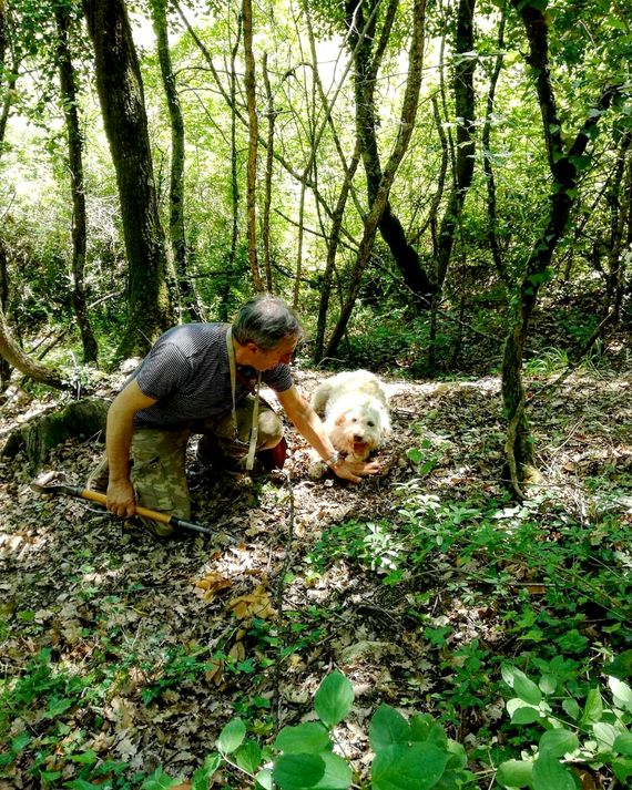 Why not go on a truffle hunt during your stay in Umbria only 5 minutes from Ranca