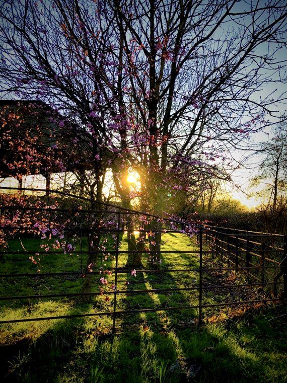 Spring is springing at Brook Farm