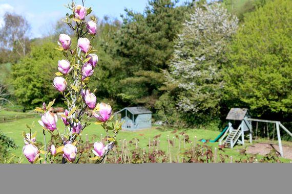 South Devon Cottages - Three (P) Image 18