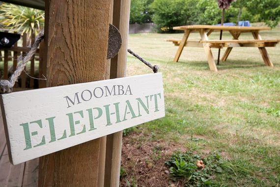 Pagel - Moomba Elephant Image 11