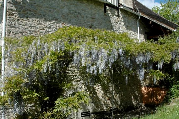 Pagel- Wisteria Image 14