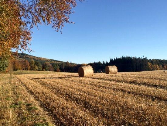 Bales in field
