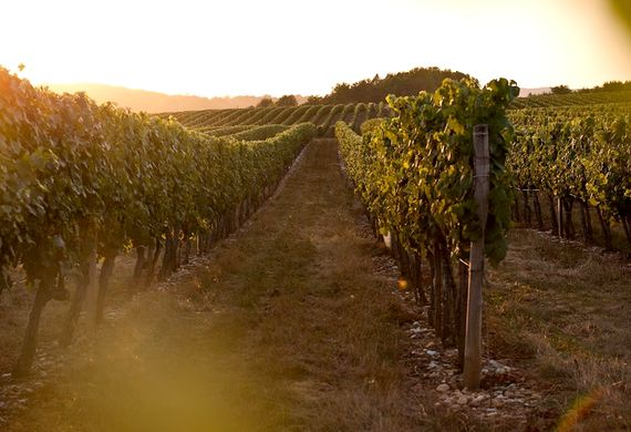 Sunset views from the terrace over the vines of Cahors