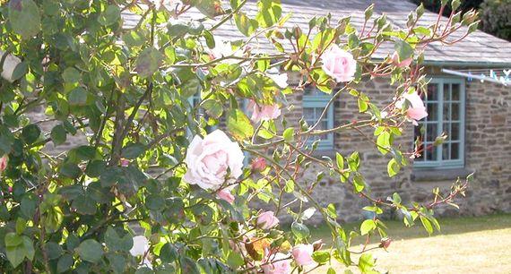 Lois' Cottage Image 11