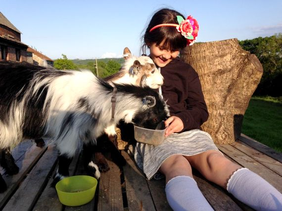 Children are welcome to take over feeding duties of the goats during their stay