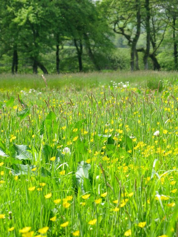 Our wildflower meadow