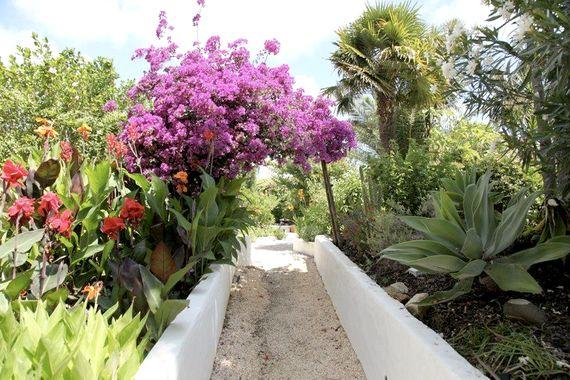 Quinta das Achadas - Bouganvillea Image 5
