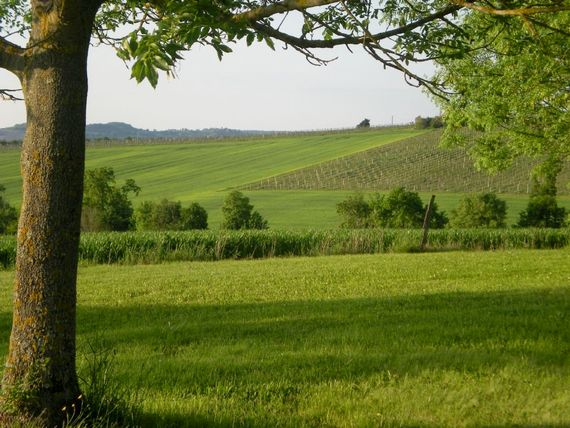 Views to the vineyards